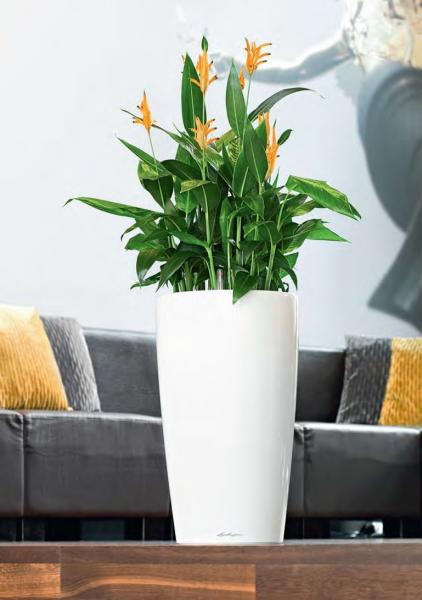 Jak Sadzić Rośliny W Dużych Donicach Blog Ogrodowenet