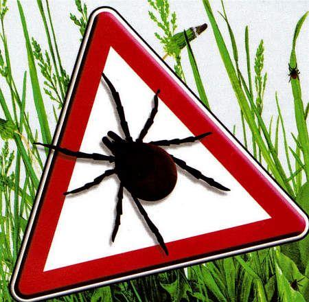 Kleszcze, to pajęczaki należące do grupy roztoczy.